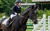 sport,horse,equestrian,