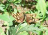 Закройте глаза и слушайте мой голос. Дышите легко и спокойно. Представьте себе, что вы находитесь на лугу в прекрасный летний день. Прямо перед собой вы видите великолепную бабочку, порхающую с цветка на цветок. Проследите за движениями ее крыльев. Движения ее крыльев легки и грациозны. Теперь пусть каждый вообразит, что он – бабочка, что у него красивые и большие крылья. Почувствуйте, как ваши крылья медленно и плавно движутся вверх и вниз...
