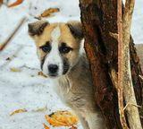 """В Гидропарке бездомный щенок""""Вы смотрели бездомной собаке в глаза?  Вы когда-нибудь видели столько печали?  Две дорожки от глаз «протоптала» слеза.  Сколько боли, несчастья у ней за плечами... """""""