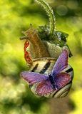 макро,улитка,бабочка,монтаж