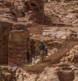 Иордания. До конечной точки Петры – монастыря Аль-Дейр нужно преодолеть около 800 ступенек, вырубленных в камне.Верхом на ослике можно не только по равнине ехать, но и легче подниматься в гору.