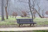 ранняя весна в Аптекарском огороде, Москва