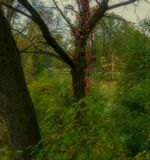 парк,август,краски