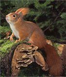 ------ Снято  в  городской  парковой  зоне ----- Приятель  орешки  показывает,  я  снимаю.                    _____________________ Камера  Power-Shot  A-70 ------