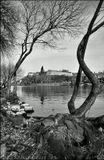 Mесто фотографирования, остров Цисаржска лука-Прага-5