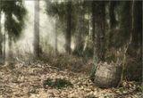 свалка в лесу не далеко от домика-музея Арины Родионовны.