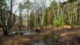 Ручей в Челябинском бору