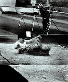 Липецк, манеж, 1986