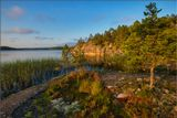 Карелия, Ладожское оз., вечер, остров, деревья