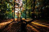 Mесто фотографирования, парк Стромовка-Прага-7
