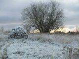 Русский баобаб и стог сена под первым снегом. Раннее утро.
