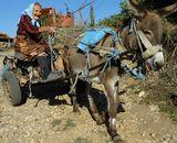 30 години сме заедно со ова магаре. ....Не го давам за 3 трактори.