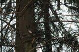неожиданная встреча в лесу