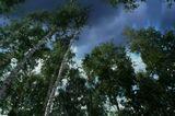 Эмоции леса