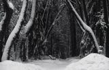 Подмосковье,зима,парк