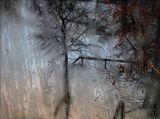 Сквозь морозный узор.зима, окно