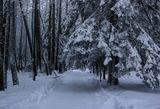 Природа,зима,подмосковье,парк