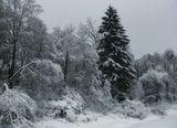 Подмосковье,зима