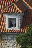 Черногория, Будва, старый город.