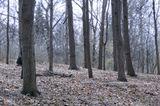 """""""В тёмно-синем лесу, где трепещут осины,где с дубов-колдуновоблетает листва..""""."""