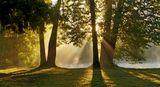 Шуваловский парк. Июль