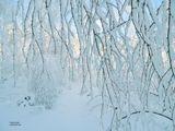 прошедший ночью сильный мокрый снег укутал все вокруг... Под утро ударил мороз, и выглянуло солнце. Началась зима. Зимняя сказка длилась недолго