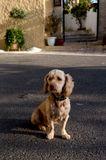 Любимая собачка настоятеля монастыря. Остров Корфу.