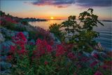 Крым. вечер, цветы