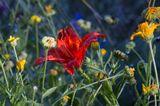 """""""Гроза отгремела, грохочут раскаты вдали,Последние капли с небес достигают земли…И словно шедевры великой земной красоты В дождинках искрясь улыбаются людям цветы!"""""""