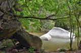 """""""Хищника"""" 1987 г. снимали где-то в этих мексиканских джунглях."""