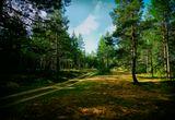 Лесной массив на берегу Белого моря.