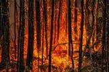 Берегите лес! #Авиалесоохрана