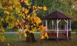 Природа,москва,осень,беселка