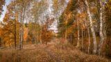 осень, октябрь, утро осенней тропкой