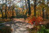 Еще прозрачен воздух без дождей,  И в золотых лучах сады и парки, Но нить времен прядут седые парки,  И желтый лист мерцает средь ветвей.  (Лариса Кузьминская)