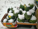 первый снег явно застал продавца арбузов врасплох.
