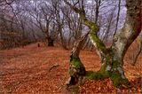 Крым, Осень, Демирджи
