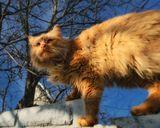 Портреты не мой конек, тренируюсь на кошках