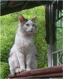 кот крыльцо дом и периметр под наблюдением