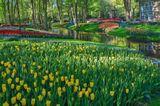 Парк цветов Кёкенхоф (Keukenhof)