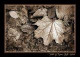 """Снимок сделан в цвете, обработан В """"PS SC2"""". Листья на асфальте. Пасмурно, рассеянный свет."""