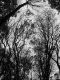 Глубокая  Осень ,сумерки ,сыро ,зябко-Софиевский парк.