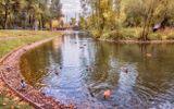 Москва, парк, осень