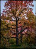 Осенние краски в главном ботаническом саду в Москве. Доступно изображение с разрешением 5440х7264px, 300ppi, tiff shishkov.dmitry@gmail.com