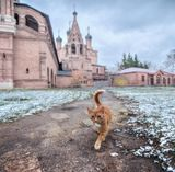 Москва, храм, осень, котёнок, подворье, Крутицкое