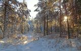 Томская область. Природа, лес.