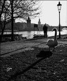 Mесто фотографирования-Страна-Прага-1
