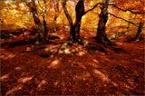 Крым, Демирджи, Осень, буковый лес.