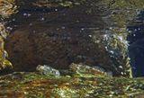 Размер Рыбок 5-7 сантиметров. Рыба- Собачка.  Красное море