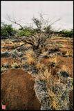 Гавайские острова, как известно имеют вулканическое происхождение, поэтому лавовые реки здесь не редкость. А жизнь, в лице пусть пожухлых, но растений; пусть вечно седой, но травы - пробьёт себе дорогу!